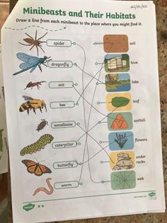 Primary Minibeasts Work