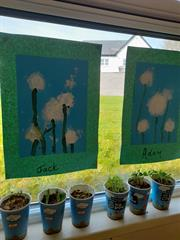 Ms Drumms Class Earth Day Activities